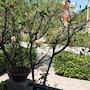 Casa Vacanze Villa Hibiscus photo 3/10