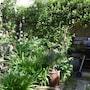 1 Bedroom Flat With Garden In Lambeth photo 15/16