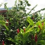 House With 3 Bedrooms in Sainte Anne, With Pool Access, Enclosed Garde photo 6/20