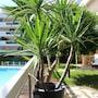 Nice Booking-Bella Vista-Piscine Jardin photo 16/17