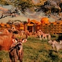 Disney's Animal Kingdom Villas - Kidani Village photo 18/41