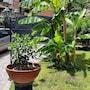 Il Giardino di Giulia 2 photo 8/34