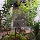 Riad Felloussia