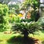 Kyriad Prestige Calangute Goa photo 4/41