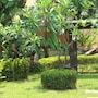 Lawana Resort photo 14/41