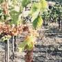 Masseria Petrella photo 18/18