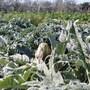 Agriturismo Il Mulino photo 4/20