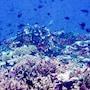 Viani Bay Resort at Dive Academy Fiji photo 8/35