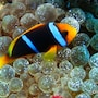 Viani Bay Resort at Dive Academy Fiji photo 13/35