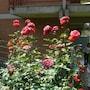 Bed and Breakfast Le Gardenie - da Fil photo 7/21