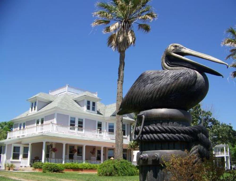 The Peaceful Pelican