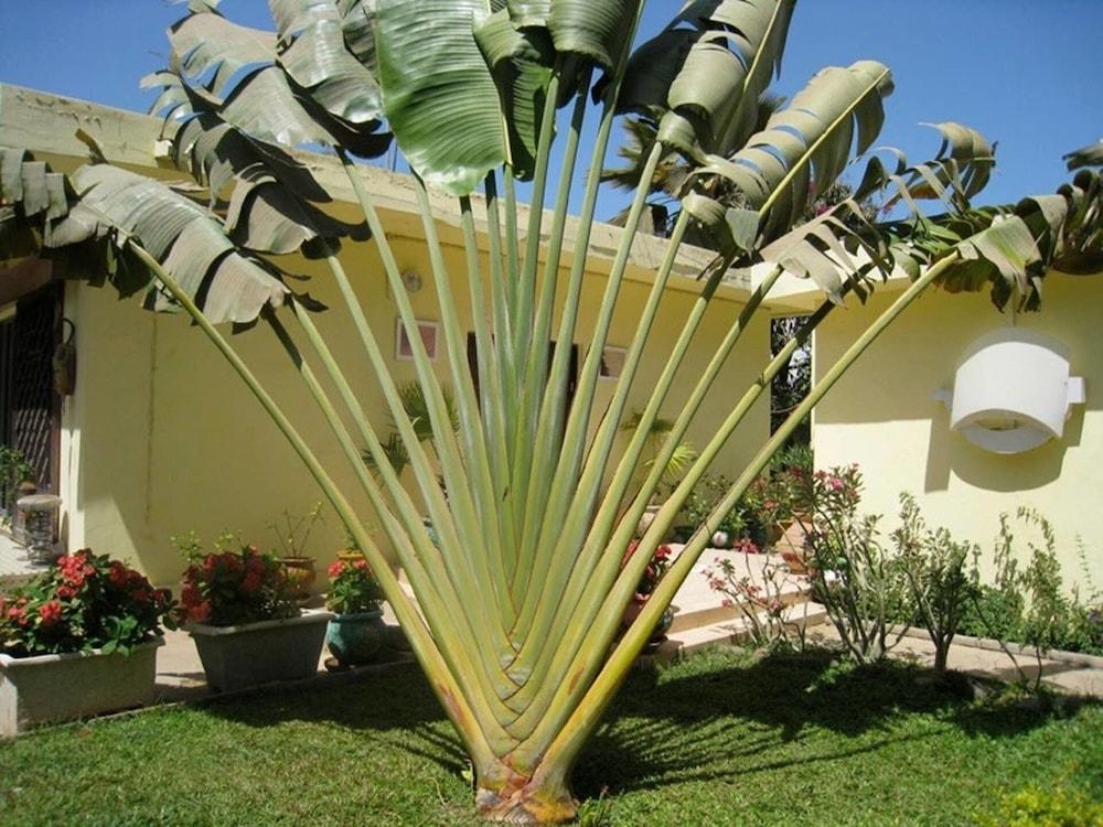 Studio in Tropical Garden