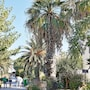 Grecotel Royal Park - All Inclusive photo 29/41