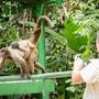 Amazon Ecopark Jungle Lodge photo 14/41
