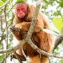 Amazon Ecopark Jungle Lodge photo 15/41