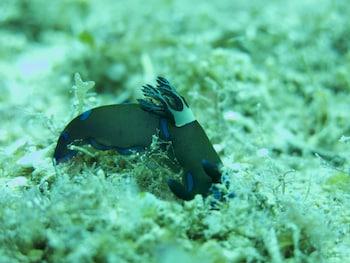 Badladz Dive Resort Puerto Galera Sports Facility