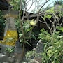 Bali Segara Hotel photo 36/41