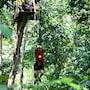 Permai Rainforest Resort photo 15/41