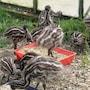 Runciman Berries and Emus B&B photo 20/41