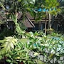 Y Resort Ubud photo 2/41