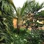 Aparthotel Jardin Tropical photo 16/41