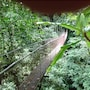 Heliconias Lodge and Rainforest photo 27/36