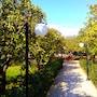 Villa Felicia photo 5/41