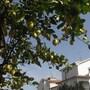 Residence Il Borgo degli Ulivi Resort photo 9/41