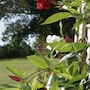 Seven Oaks Bed and Breakfast photo 2/37