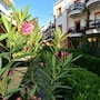 Tropicana Beach Hotel photo 41/41