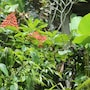 Karang Mesari Ubud Guest House photo 25/41