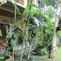 Karang Mesari Ubud Guest House photo 29/41