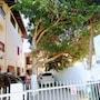 Ingleses Residence photo 29/34
