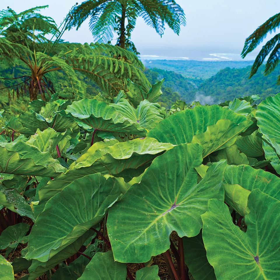 Samoa Beaches: Adventure In Savii Samoa