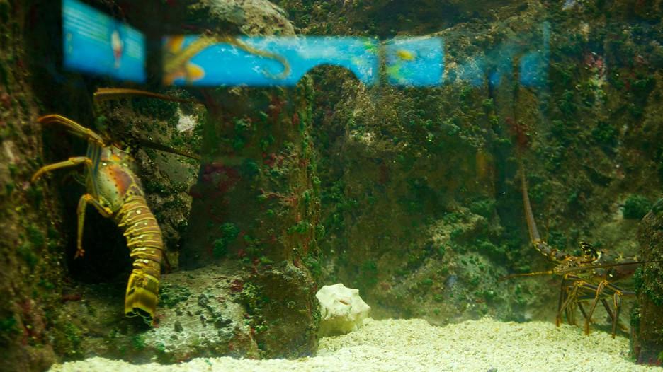 San Antonio Zoo And Aquarium In San Antonio Texas Expedia