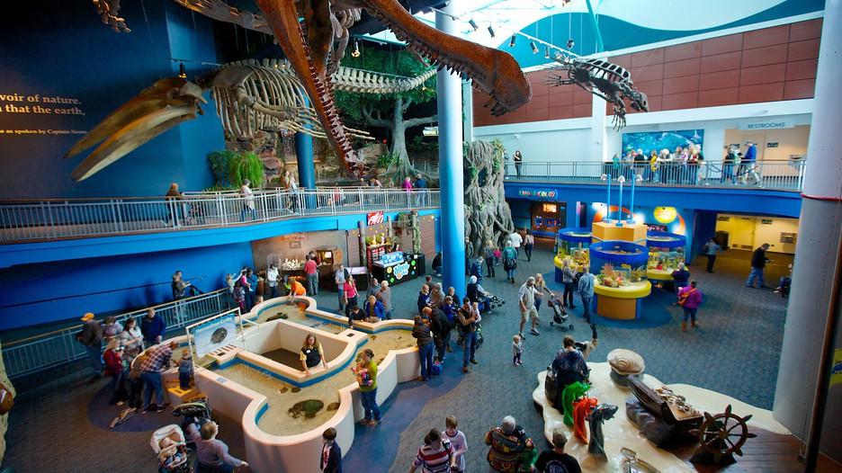 Toronto Hotel Deals With Ripley S Aquarium